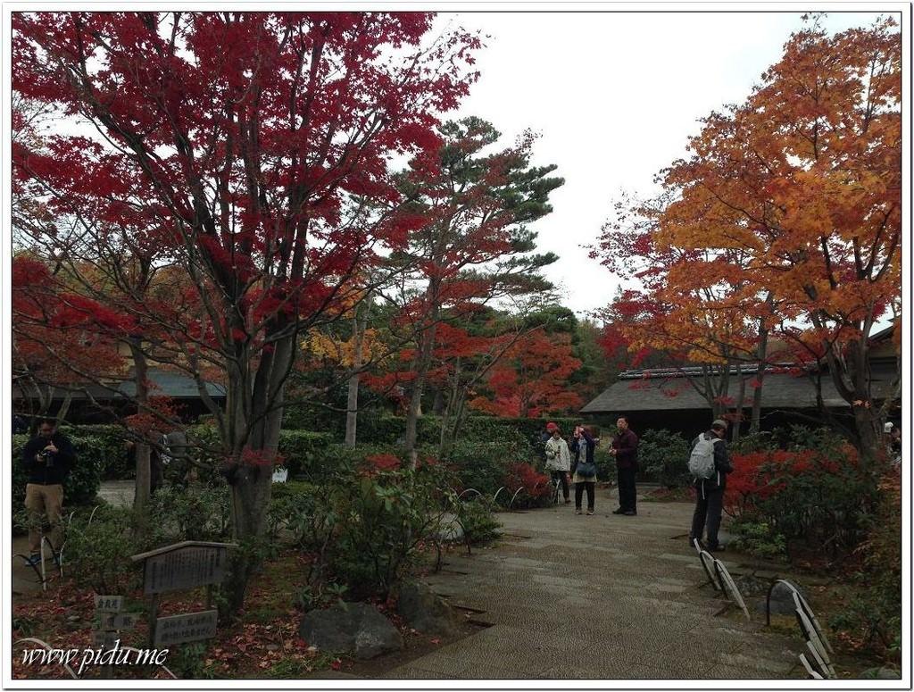 國營昭和記念公園